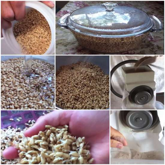 homemade-sprouted-wheat-flour