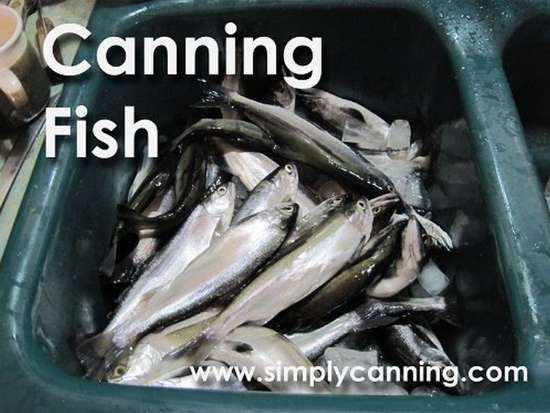 how-to-can-fish