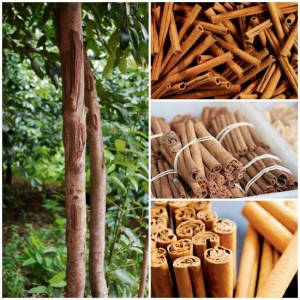 Guide: How To Grow Cinnamon