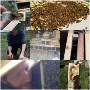 install-a-beehive-from-a-package