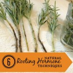 6 Ways To Make A Natural Rooting Hormone