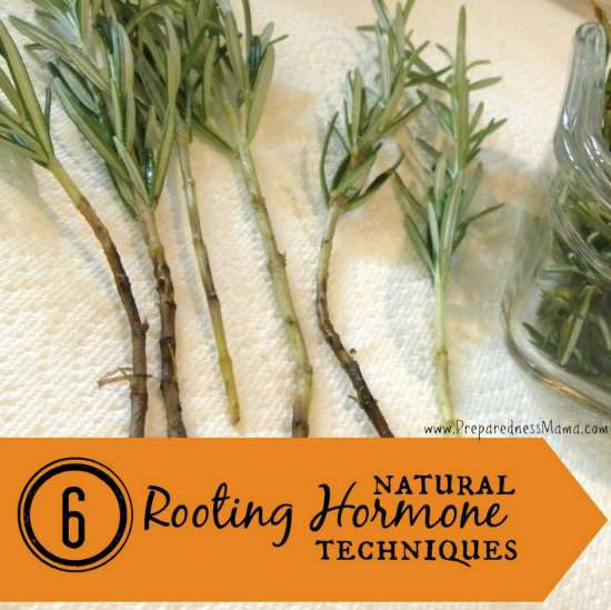 natural-rooting-hormone