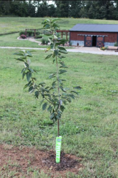 plant-fruit-trees-in-the-fall