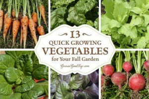 quick-growing-vegetables