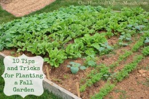 tips and tricks-for-planting-a-fall-garden