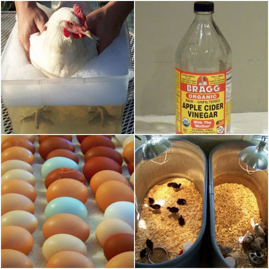 uses-for-vinegar-around-the-coop