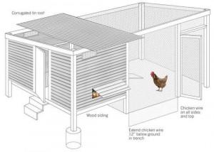 build-a-chicken-coop