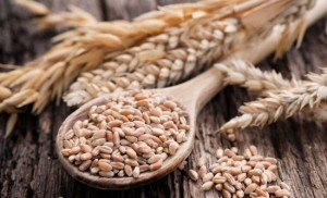 grow-and-harvest-grains-in-your-backyard