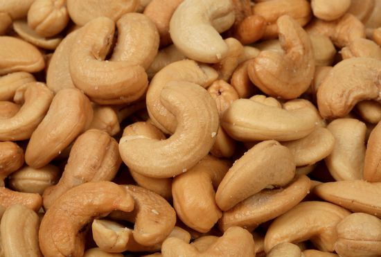grow-cashews-indoors