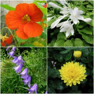 9 Ornamental Plants You Can Eat