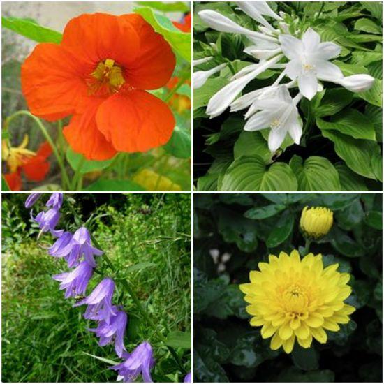 ornamental-plants-you-can-eat