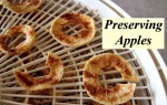 Preserving Apples – How To Make Applesauce, Apple Leather, And Dried Apple Slices