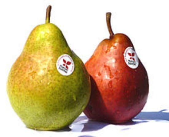 bartlett-pear-best-dwarf-trees