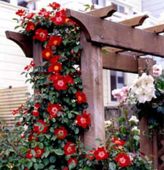 build-garden-arbor-diy-backyard-arbor