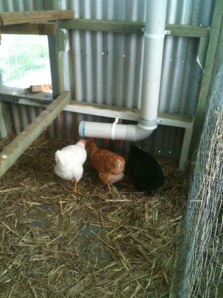 chicken-water-system-chicken-coop-upgrades