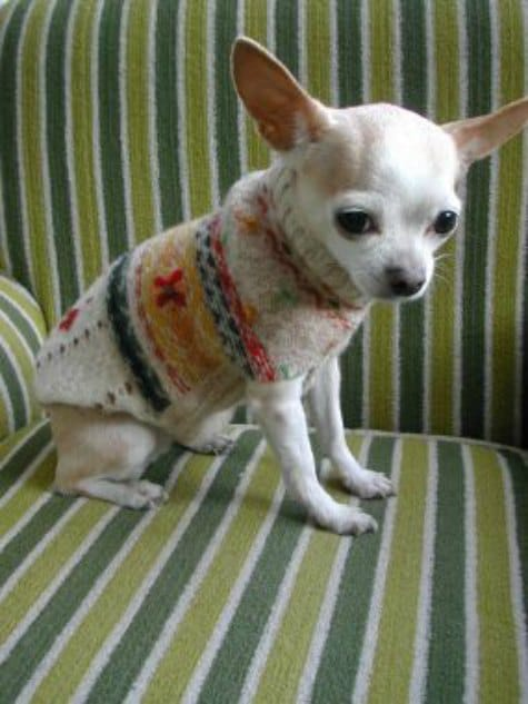 dog-sweater-ways-to-repurpose-old-sweaters