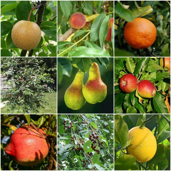 21 best dwarf trees for containers