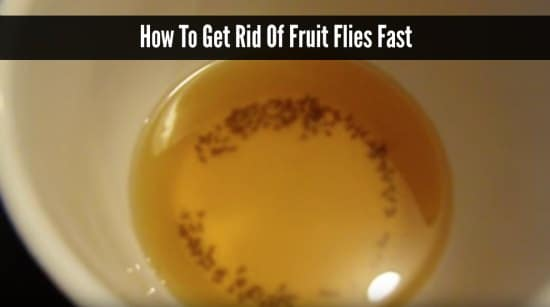 how do i get rid of fruit flies healthy fruit snacks recipes