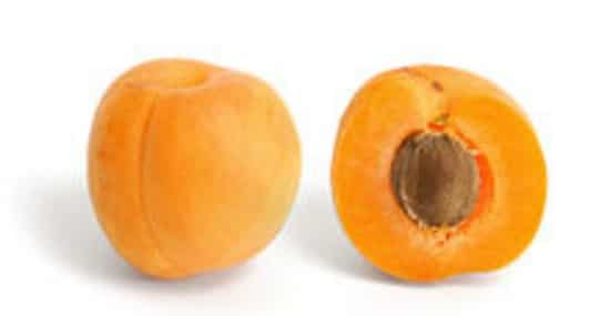 goldcot-apricot-best-dwarf-trees