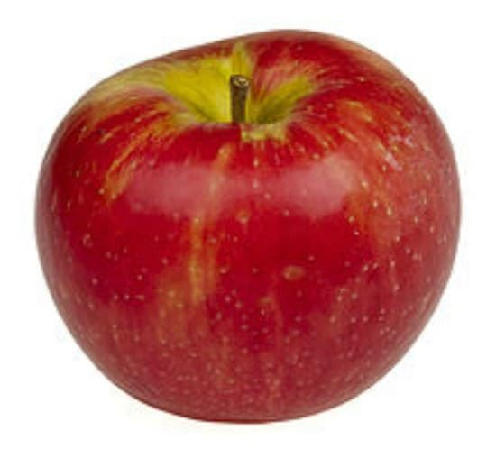 honeycrisp-apple-best-dwarf-trees