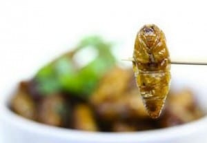 Top 15 Insects You Can Eat To Survive…And How