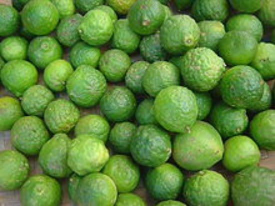 kaffir-lime-best-dwarf-trees
