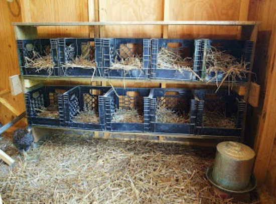 milk-crates-inexpensive-nesting-boxes
