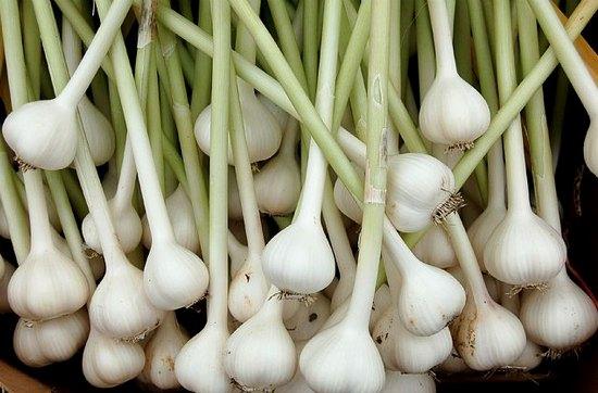 perennial-vegetables-4