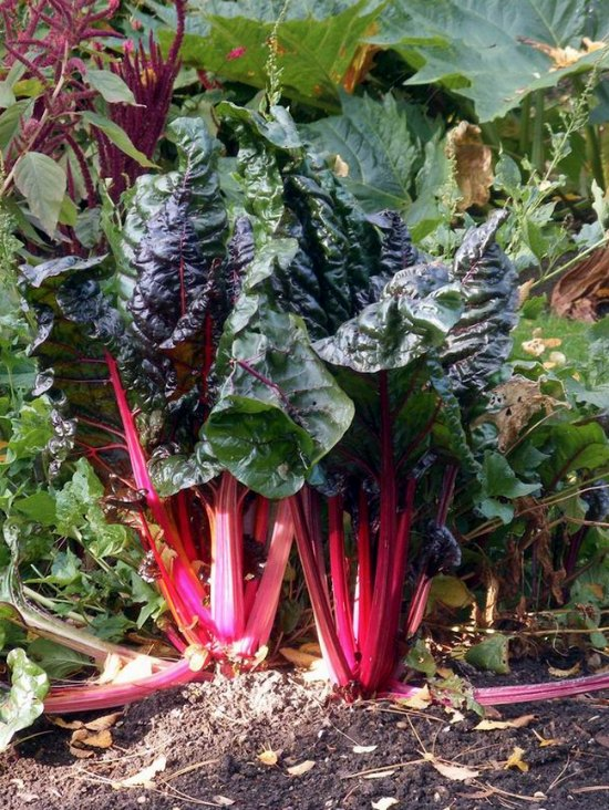 perennial-vegetables-6