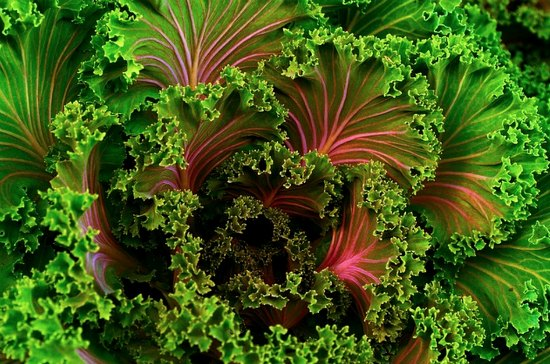 perennial-vegetables-7