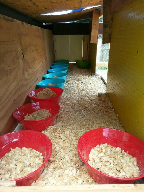 plastic-bowl-nesting-box-inexpensive-nesting-boxes