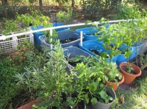 pvc-garden-watering-system