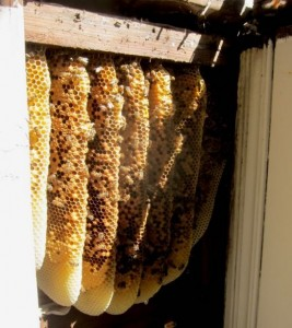 How To Remove Bees From A Wall