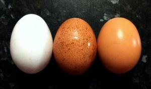 test-egg-freshness