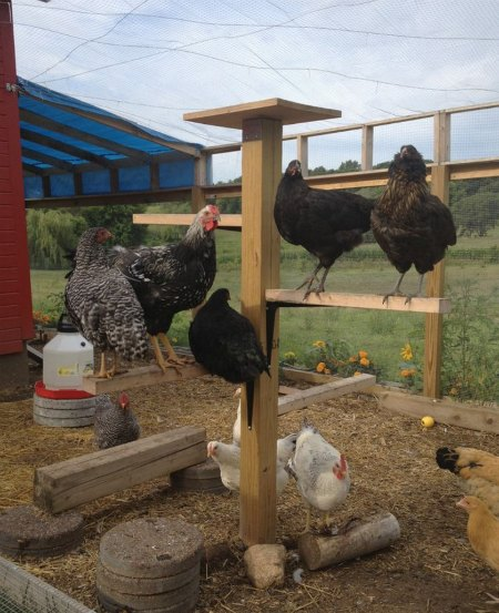 tree-roost-chicken-coop-upgrades