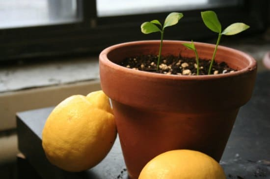 11-Foods-To-Buy-Once-And-Regrow-Forever