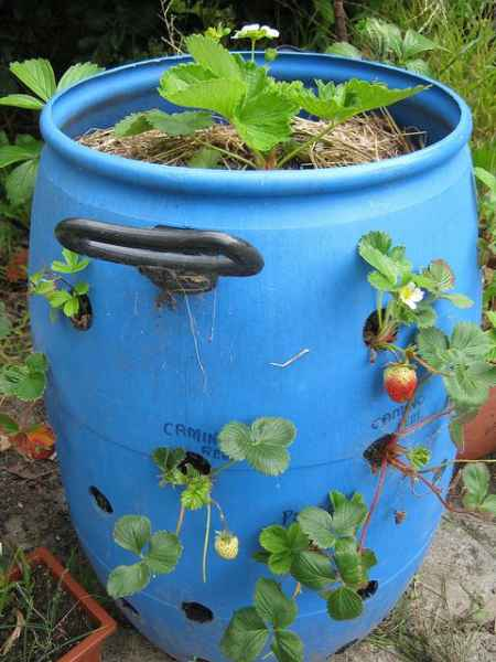 18 Genius Homestead Uses For 55 Gallon Plastic Barrels