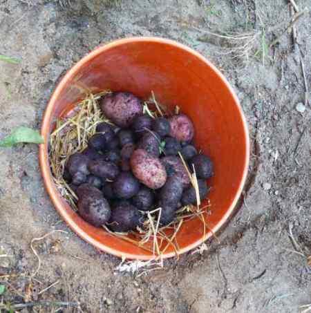 11-root-cellar-alternatives