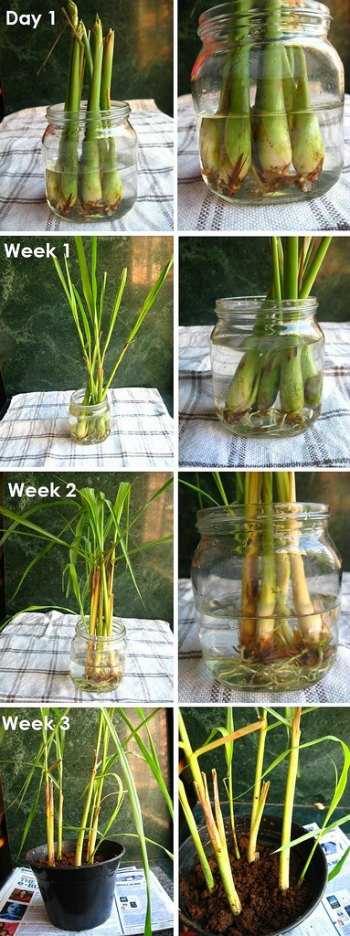 13-Foods-To-Buy-Once-And-Regrow-Forever