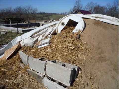 18 Root Cellar Alternatives
