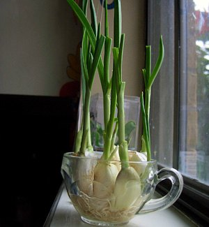 2-Foods-To-Buy-Once-And-Regrow-Forever