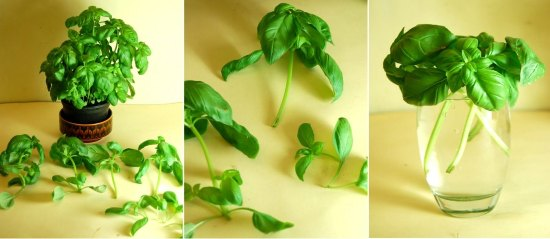 5-Foods-To-Buy-Once-And-Regrow-Forever