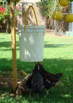 7-Brilliant-Ways-To-Use-Five-Gallon-Buckets-On-The-Homestead