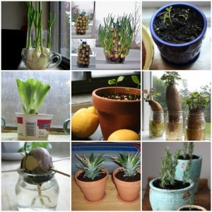 22 Foods To Buy Once And Regrow Forever