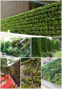 15 Living Privacy Fences