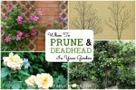 When To Prune And Deadhead Your Garden
