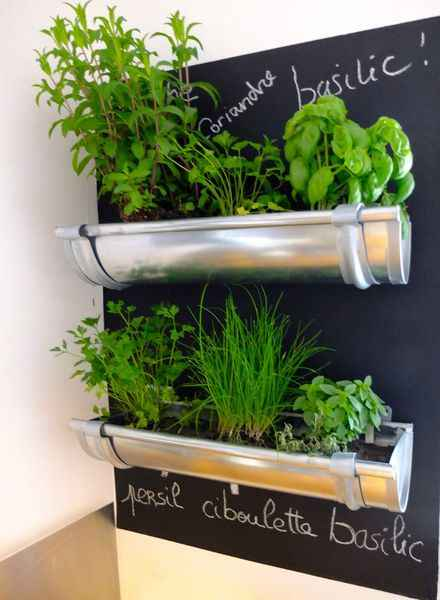 1-best-ways-to-grow-food-indoors