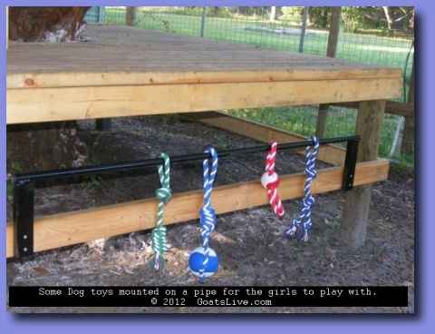10-toys-for-goats-to-keep-them-busy