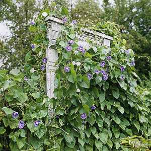 13-diy-garden-trellis-projects