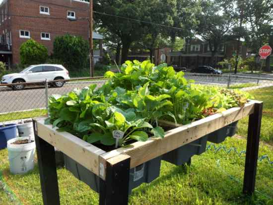 2-diy-elevated-planter-boxes-for-easy-gardening